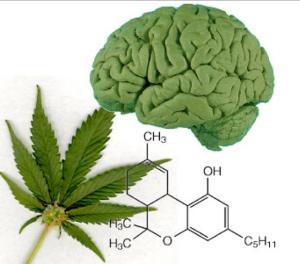 Medicinal Marijuana: Advantages & Disadvantages